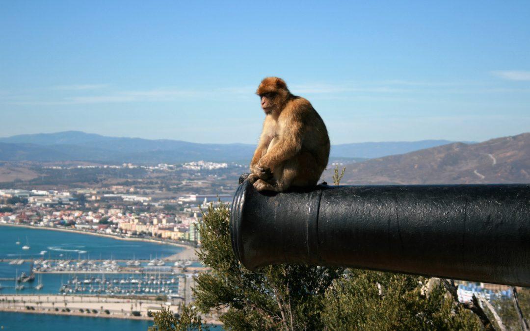 Gibraltar J1